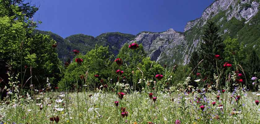 Bohinj International Wild Flower Festival.jpg